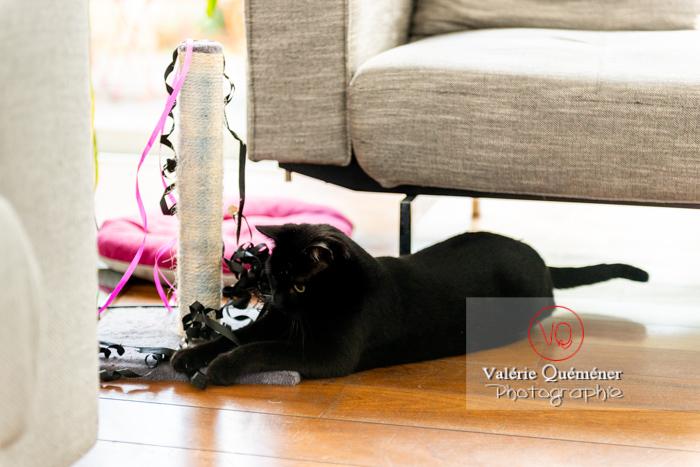 Chat noir jouant en intérieur - Réf : VQA1-24-0647 (Q3)