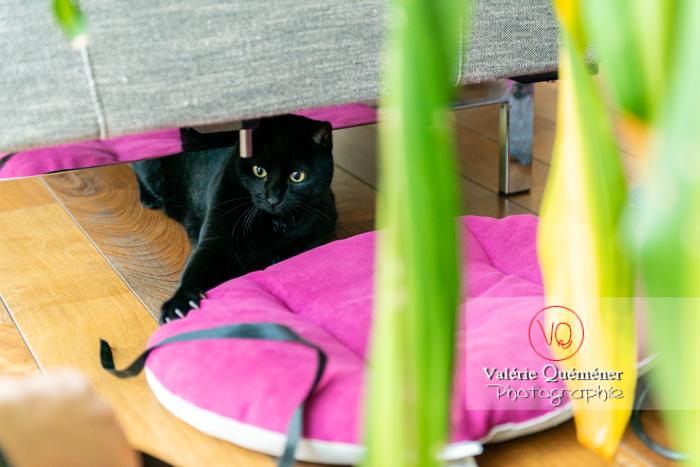 Chat noir jouant en intérieur - Réf : VQA1-24-0664 (Q3)
