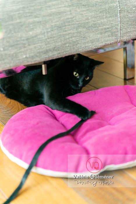 Chat noir jouant en intérieur - Réf : VQA1-24-0668 (Q3)