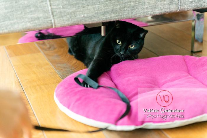 Chat noir jouant en intérieur - Réf : VQA1-24-0669 (Q3)
