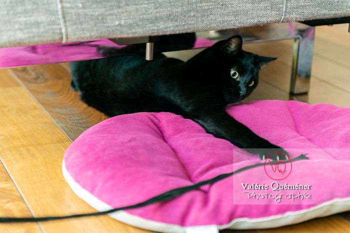 Chat noir jouant en intérieur - Réf : VQA1-24-0670 (Q3)
