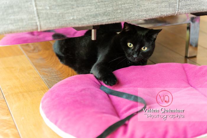 Chat noir jouant en intérieur - Réf : VQA1-24-0672 (Q3)
