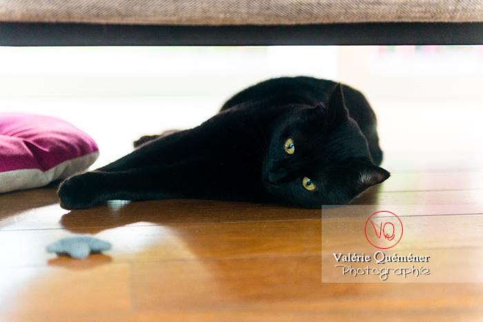 Chat noir allongé sous un canapé - Réf : VQA1-24-0677 (Q3)
