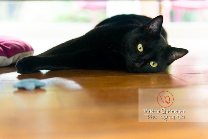 Chat noir allongé sous un canapé - Réf : VQA1-24-0679 (Q3)