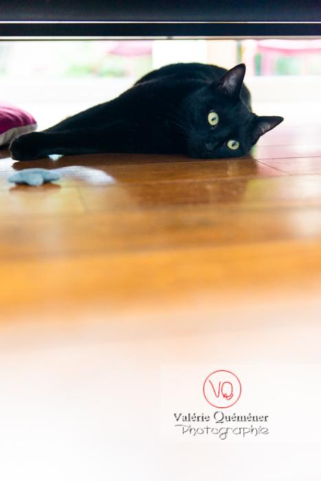 Chat noir allongé sous un canapé - Réf : VQA1-24-0680 (Q3)