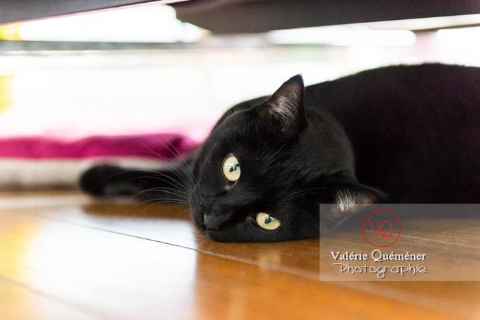 Regard d'un chat noir allongé sous le canapé - Réf : VQA1-24-0682 (Q3)