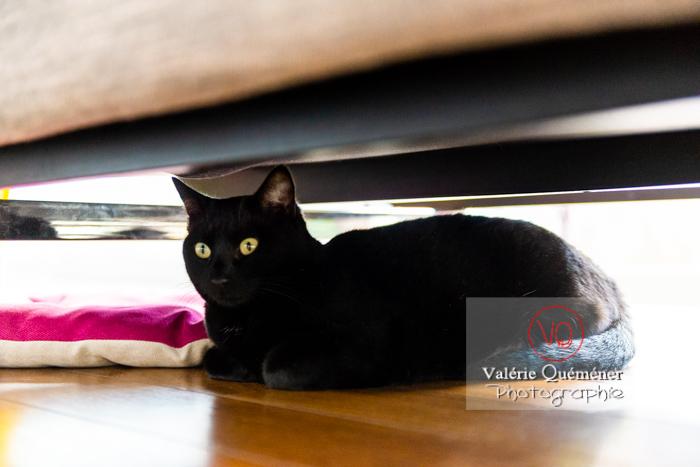 Chat noir allongé sous un canapé - Réf : VQA1-24-0683 (Q3)