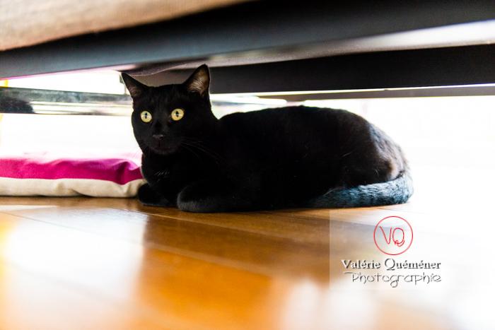 Chat noir allongé sous un canapé - Réf : VQA1-24-0684 (Q3)
