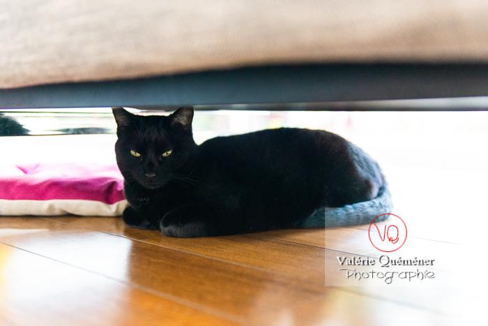 Chat noir allongé sous un canapé - Réf : VQA1-24-0686 (Q3)