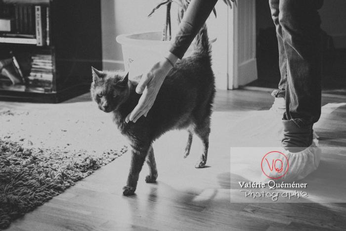 Visite à domicile d'un chat domestique bleu (gris) - Réf : VQA1-24-0831-2 (Q3)