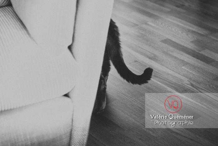 Queue d'un chat domestique bleu (gris) derrière le canapé - Réf : VQA1-24-0877-N&B (Q3 rec)