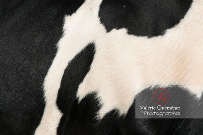 Détail robe d'une vache laitière de race Prim' Holstein / Haute-Garonne - Réf : VQA1-45-0016 (Q2)