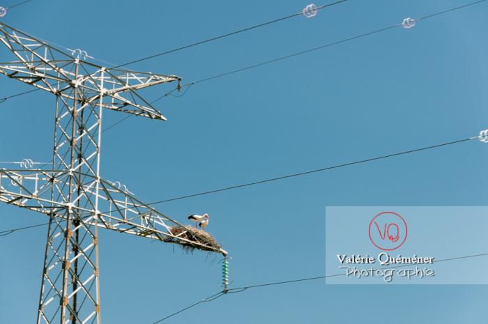 Cigognes sur leur nid sur une ligne à haute tension - réf : VQA27-0024 (Q1)