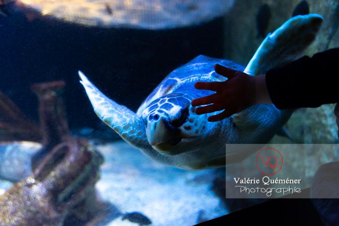 Tortue / Aquarium de Monaco - Réf : VQA31-0011 (Q3)