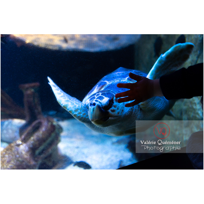 Tortue de mer / Aquarium de Monaco - Réf : VQA31-0011 (Q3)
