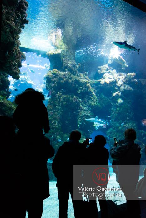 Silhouette devant la grande baie vitrée / Aquarium de Monaco - Réf : VQA5-0169 (Q3)