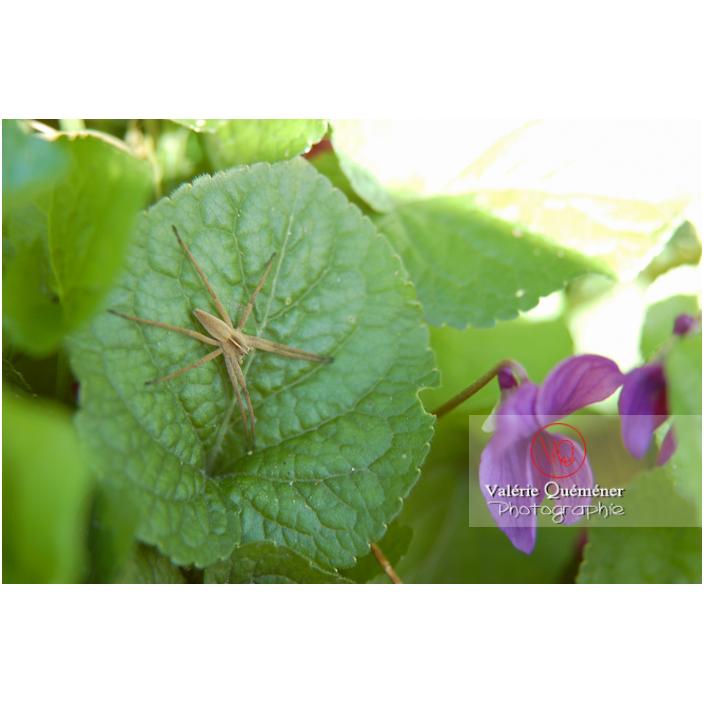 Araignée sur une feuille verte - Réf : VQA6-0025 (Q1)