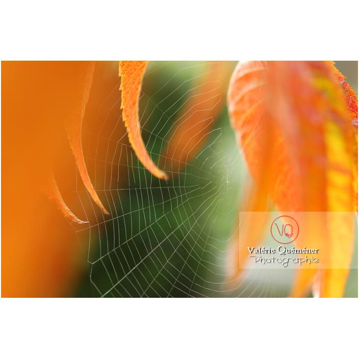 Fine toile d'araignée entre des feuilles de sumac oranges à l'automne - Réf : VQA6-0044 (Q1)