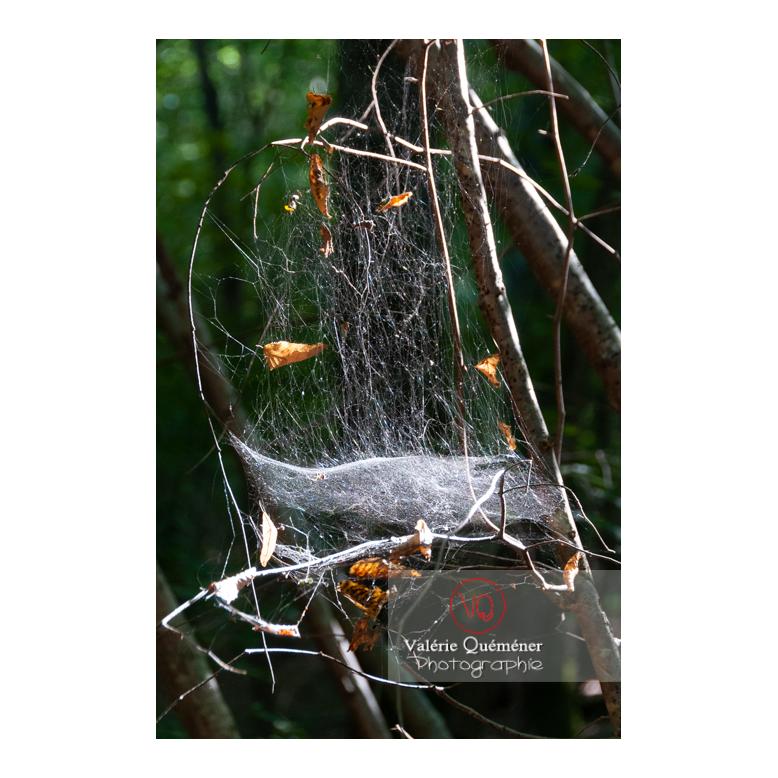 Épaisse toile d'araignée - Réf : VQA6-0151 (Q2)
