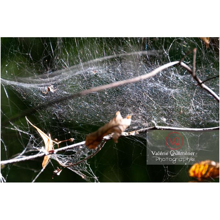 Épaisse toile d'araignée - Réf : VQA6-0152 (Q2)