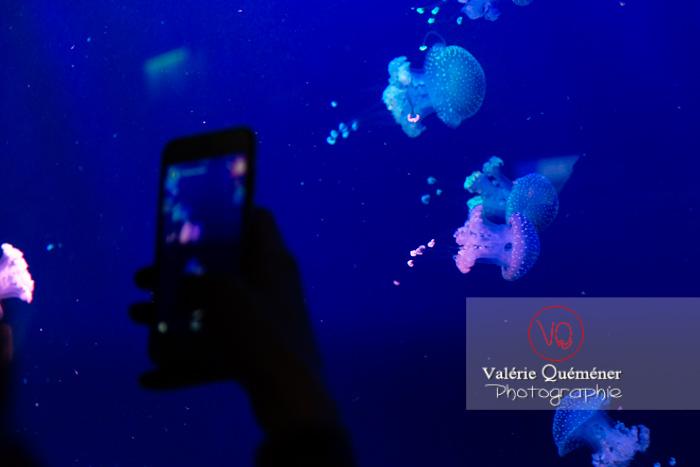 Silhouette d'un téléphone prenant en photos de méduses à l'aquarium de Monaco - Réf : VQA9-0030 (Q3)