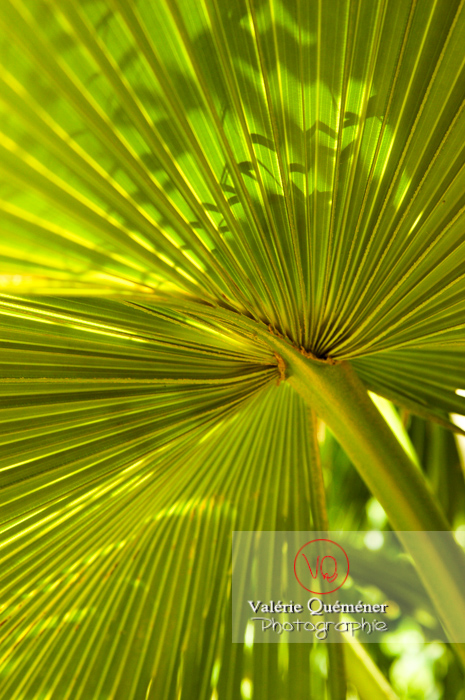 Feuille de palmier - Réf : VQF&J-0507 (Q1)