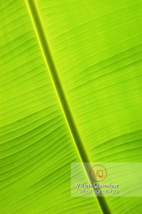 Feuille de bananier - Réf : VQF&J-0517 (Q1)