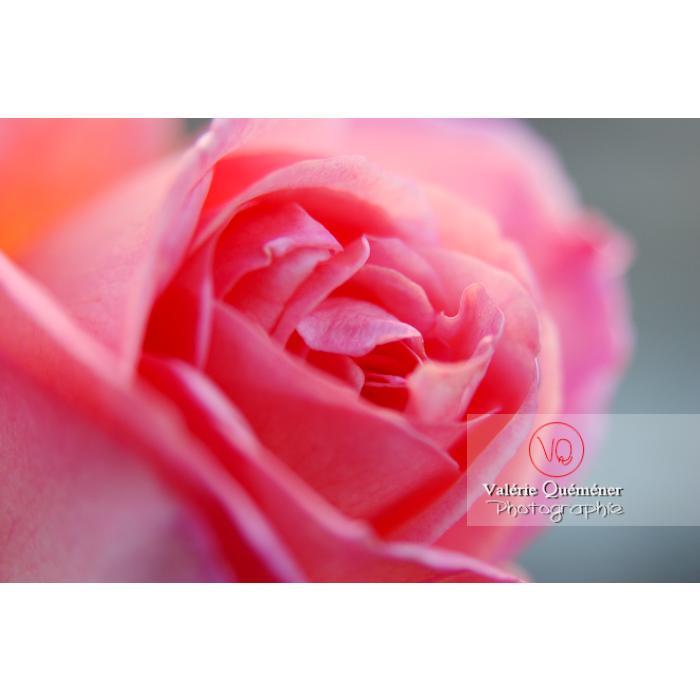 Fleur bouton de rose - Réf : VQF&J-0574 (Q1)