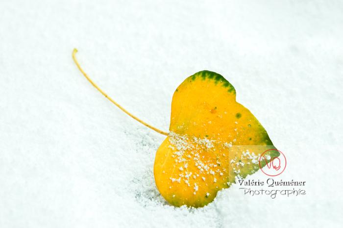 Feuille jaune dans la neige - Réf : VQF&J-0892 (Q1)