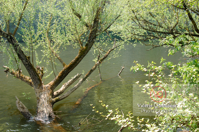 Arbre dans l'eau - Réf : VQF&J-1042 (Q1)