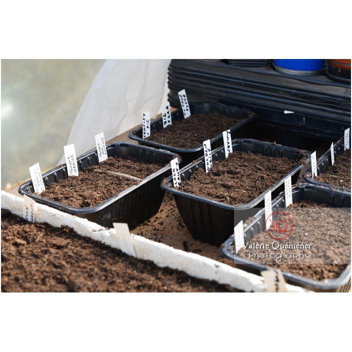 Recyclage barquette alimentaire comme contenant pour semis - Réf : VQF&J-13132 (Q3)
