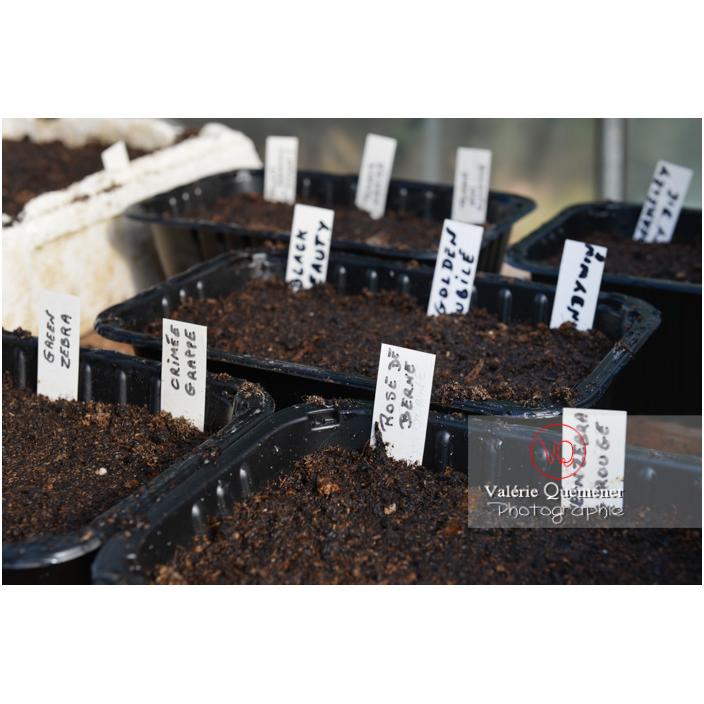 Recyclage barquette alimentaire comme contenant pour semis - Réf : VQF&J-13140 (Q3)