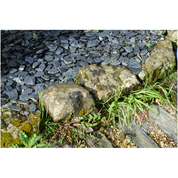 Bordure d'allée en pierres brutes - Réf : VQF&J-13156 (Q3)