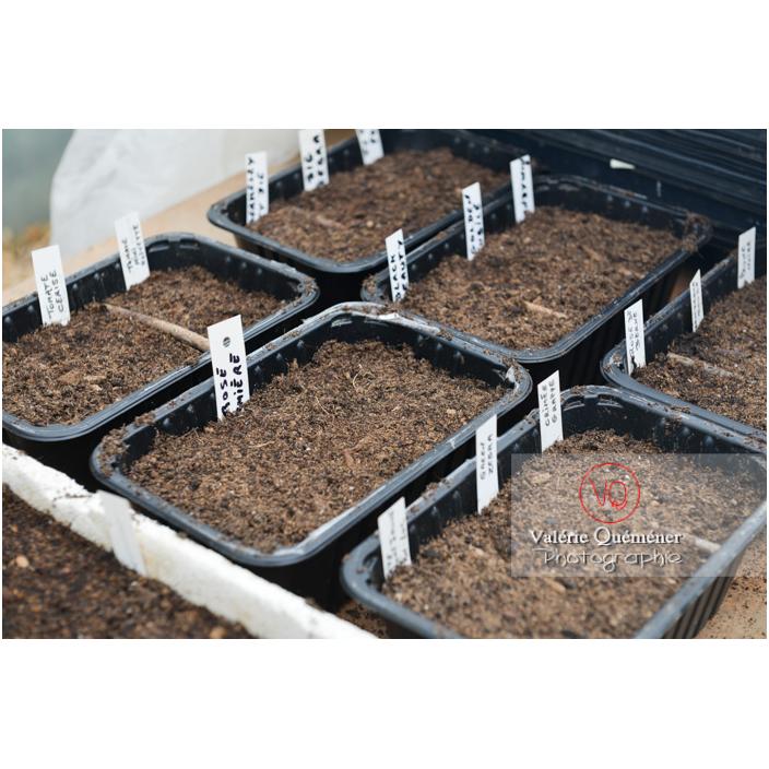 Recyclage barquette alimentaire comme contenant pour semis - Réf : VQF&J-13167 (Q3)