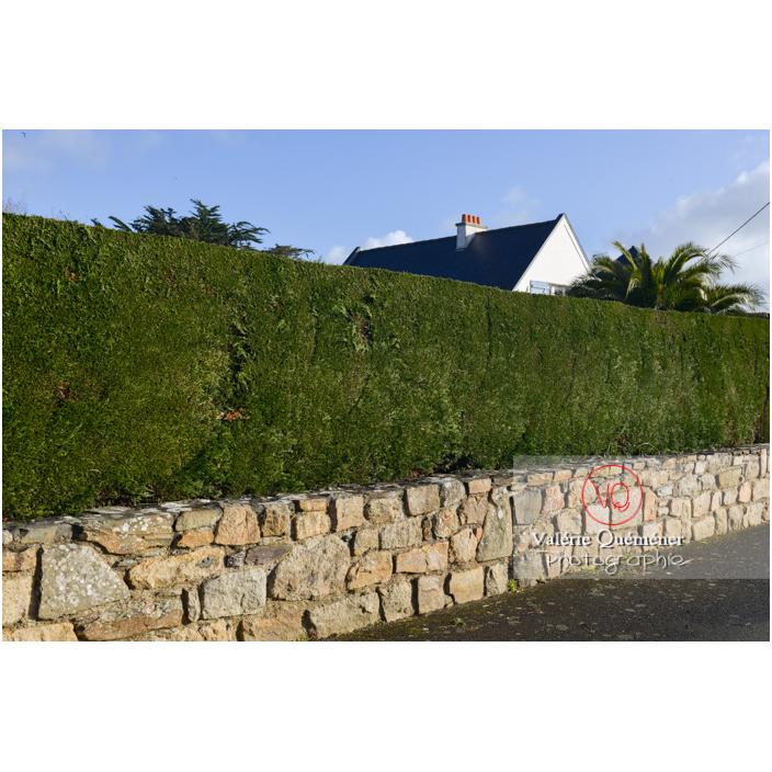 Haie comme palissade sur un muret en pierre - Réf : VQF&J-13188 (Q3)