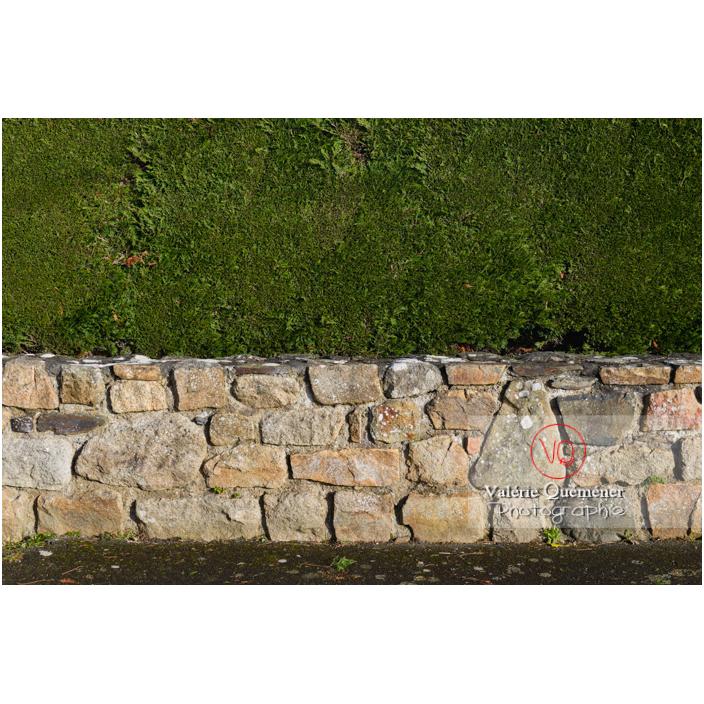 Haie comme palissade sur un muret en pierre - Réf : VQF&J-13189 (Q3)