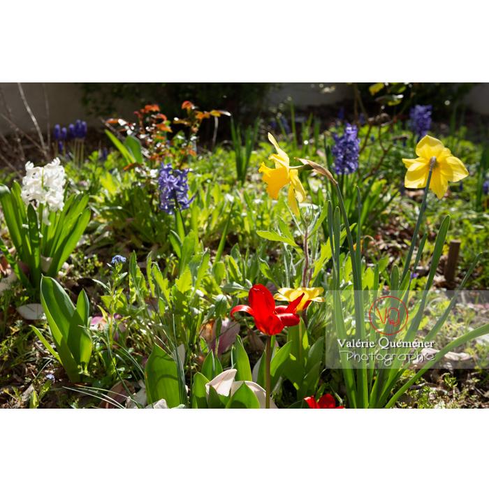 Fleurs de jonquille - Réf : VQF&J-9608 (Q3)