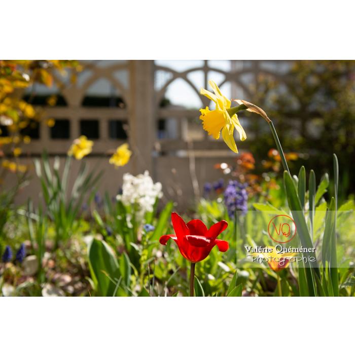 Fleurs de jonquille - Réf : VQF&J-9610 (Q3)