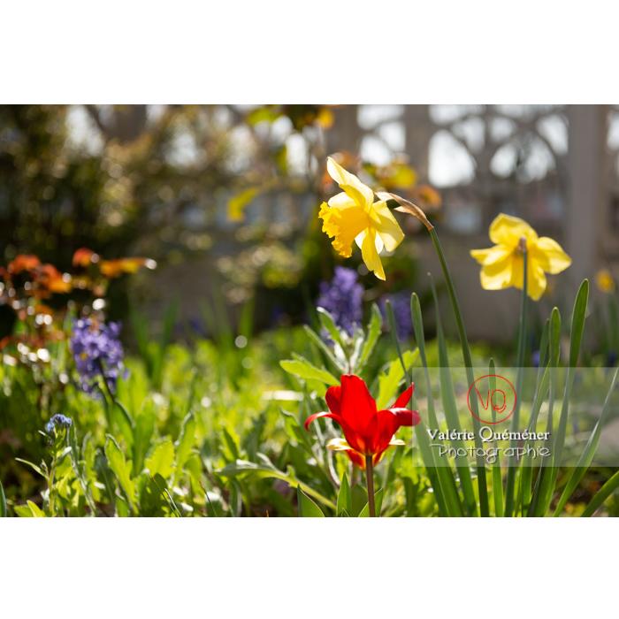 Fleurs de jonquille - Réf : VQF&J-9612 (Q3)