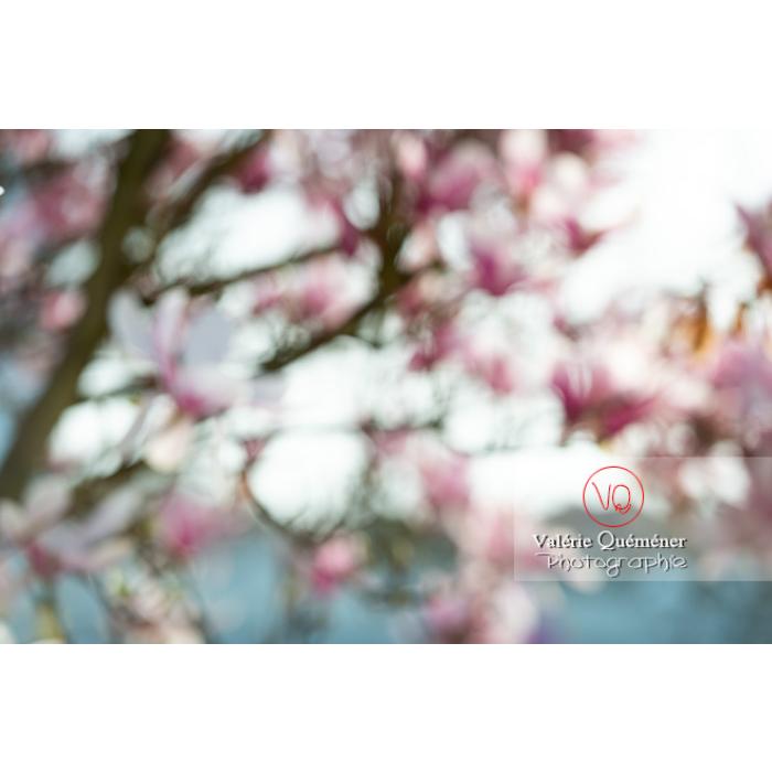 Fleurs de magnolia floues - Réf : VQF&J-9638 (Q3)