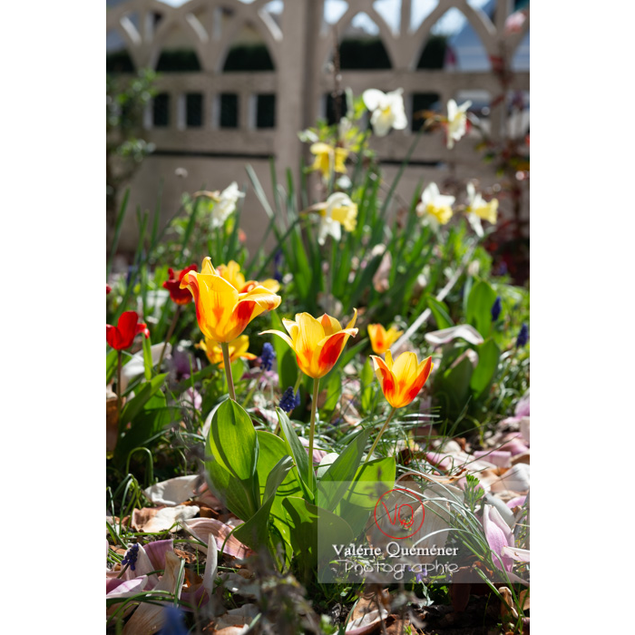 Tulipes jaune et rouge - Réf : VQF&J-9671 (Q3)