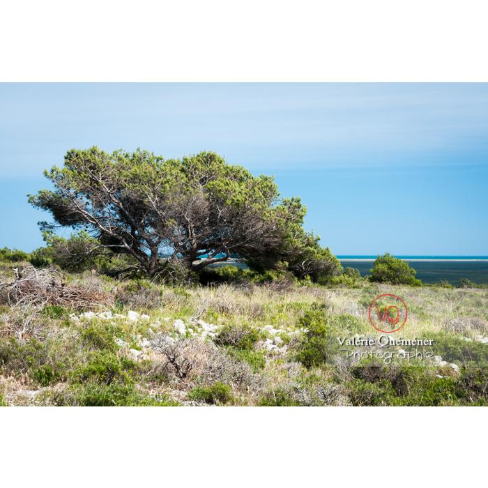 Parc naturel régional de la Narbonnaise en Méditerranée autour de l'étang de Bages-Sigean / Aude / Occitanie - Réf : VQFR11-0153 (Q2)