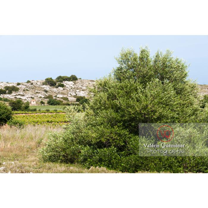 Parc naturel régional de la Narbonnaise en Méditerranée autour de l'étang de Bages-Sigean / Aude / Occitanie - Réf : VQFR11-0157 (Q2)