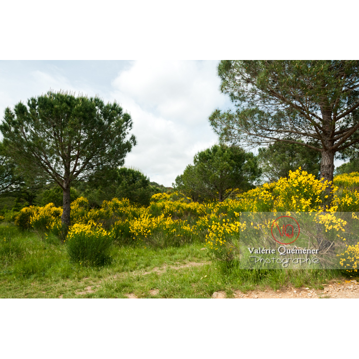 Paysage autour de l'Abbaye de Fonfroide (MH) / Aude / Occitanie - Réf : VQFR11-0175 (Q2)