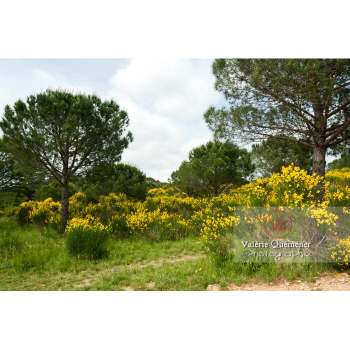 Paysage de guarrigue autour de l'Abbaye de Fontfroide (MH) / Aude / Occitanie - Réf : VQFR11-0175 (Q2)
