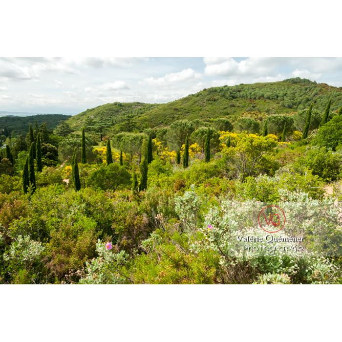 Paysage autour de l'Abbaye de Fonfroide (MH) / Aude / Occitanie - Réf : VQFR11-0177 (Q2)