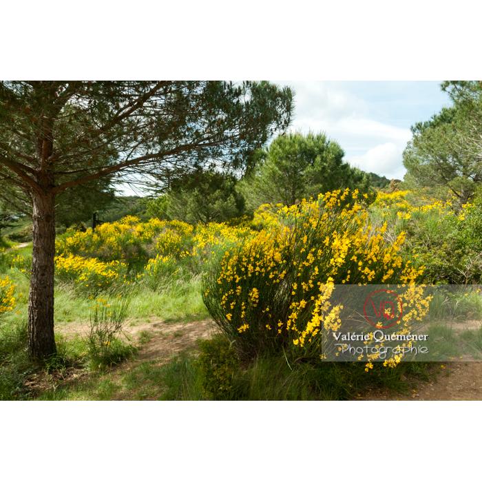 Paysage de guarrigue autour de l'Abbaye de Fontfroide (MH) / Aude / Occitanie - Réf : VQFR11-0178 (Q2)