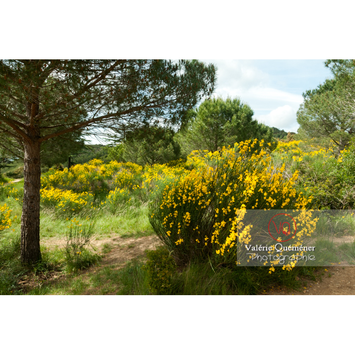 Parc naturel régional de la Narbonnaise en Méditerranée autour de l'abbaye de Fontfroide - Réf : VQFR11-0178 (Q2)