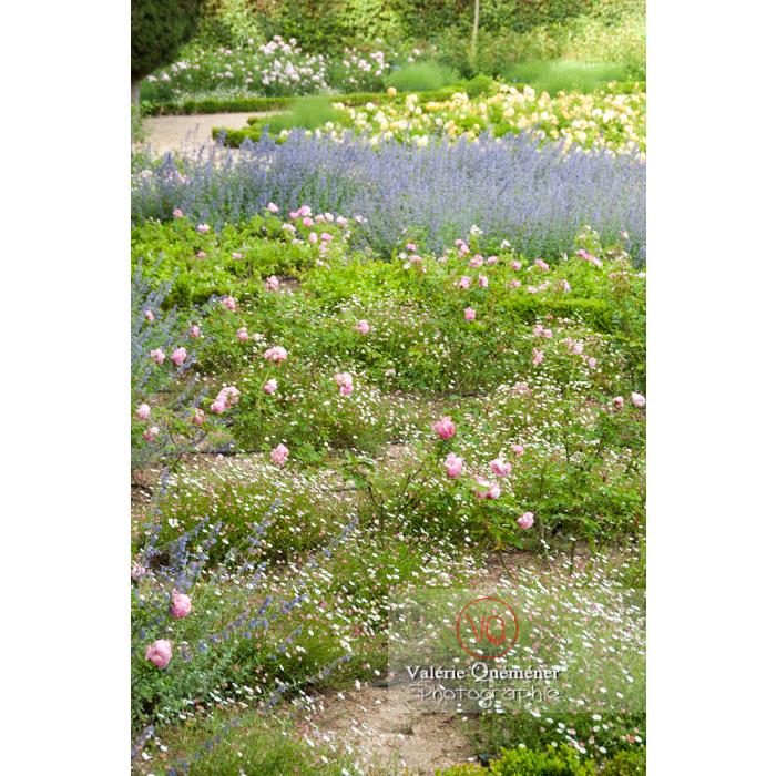 Massif de fleurs du jardin de l'Abbaye de Fonfroide (MH) / Aude / Occitanie - Réf : VQFR11-0203 (Q2)