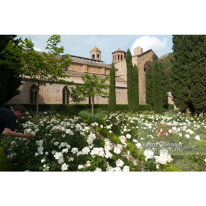 Roseraie de l'Abbaye de Fontfroide (MH) / Aude / Occitanie - Réf : VQFR11-0204 (Q2)